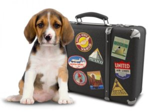 Tips For Traveling With Pets By Air {Infographic}