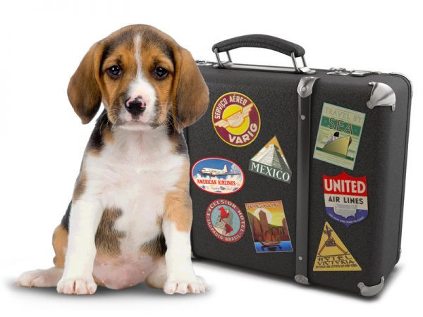 Tips For Traveling With Pets By Air