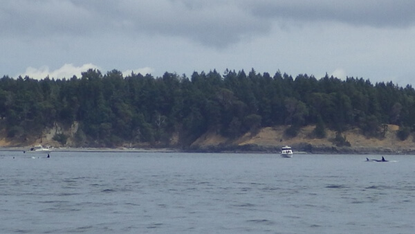 Whale Watching Tour Victoria BC