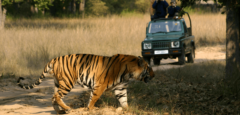 Safari Adventure Packing Tips {Good To Know}